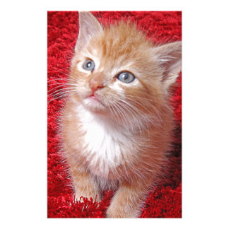 Ginger Kitten Stationery