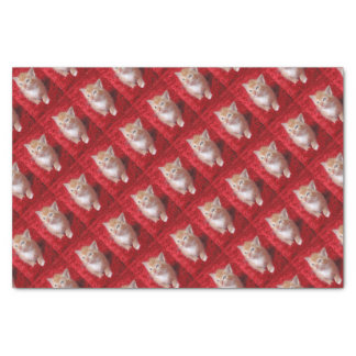 Ginger Kitten Tissue Paper
