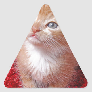 Ginger Kitten Triangle Sticker