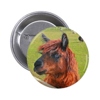 Ginger Llama 2 Inch Round Button