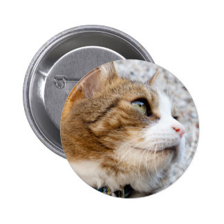 Ginger Tabby Cat Photograph 2 Inch Round Button