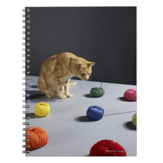 Ginger tabby cat sitting on table spiral notebooks