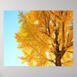 Gingko Tree, Nagano Prefecture, Japan Poster