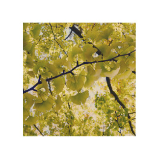 Ginkgo Leaves: Japan Wood Print
