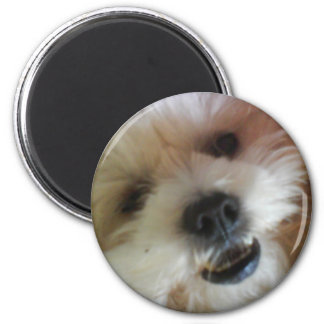 Ginny Pop Magnet