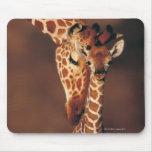 Girafe adulte avec le veau (camelopardalis de Gira Tapis De Souris