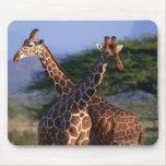 Girafe réticulée 2 tapis de souris