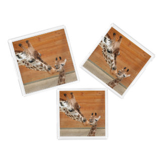 Giraffe_20151101_by_JAMFoto Acrylic Tray