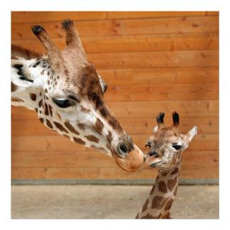 Giraffe_20151101_by_JAMFoto Photo Print