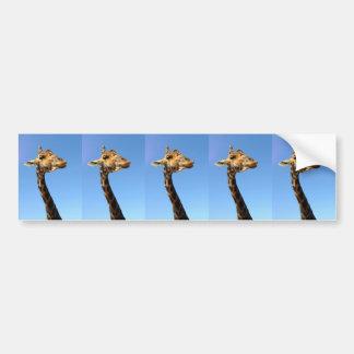 giraffe-468948 FUNNY HUMOR WILD ANIMALS ATTITUDE L Bumper Sticker