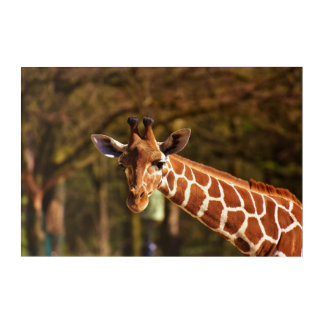 Giraffe Acrylic Wall Art