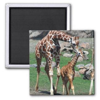 Giraffe Africa Safari Animal Personalize Giraffes Magnet