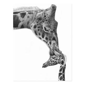Giraffe and Calf Postcard
