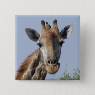 Giraffe and oxpecker Button