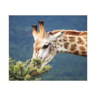 Giraffe and the best leaves are on top gallery wrap canvas