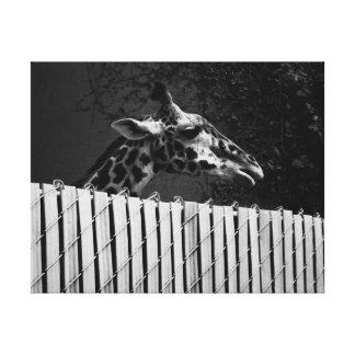 Giraffe behind Fence Black & White Photograph Canvas Print