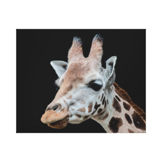 Giraffe Canvas