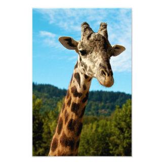 Giraffe Close Up Print Photo Art
