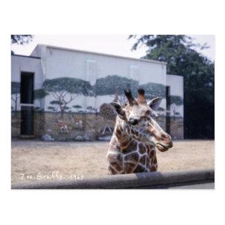 Giraffe, Cute Classic Retro Zoo Picture Giraffes Postcard