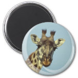 Giraffe Design  Magnet Refrigerator Magnets