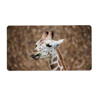 Giraffe Eating Grass
