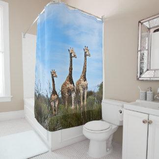 Giraffe Family On Grassy Hilltop