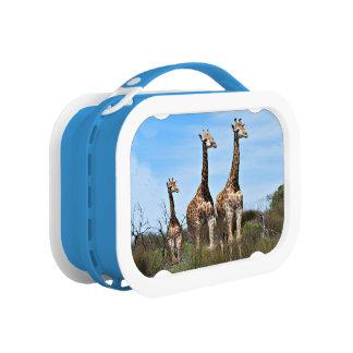 Giraffe Family On Grassy Hilltop Lunch Box