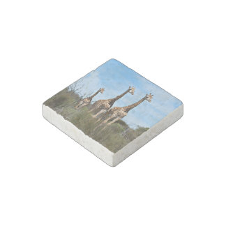 Giraffe Family On Grassy Hilltop Stone Magnets