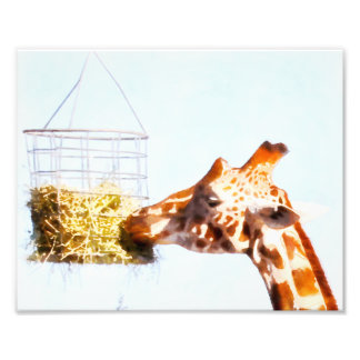 Giraffe feeding from overhead basket photo print