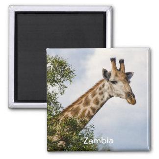 Giraffe Fridge Magnet - Zambia