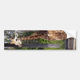 Giraffe Friends Bumper Sticker