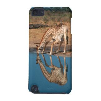 Giraffe (Giraffa Camelopardalis) Drinking iPod Touch (5th Generation) Cover