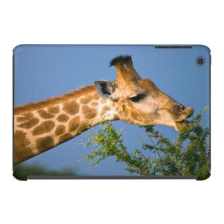 Giraffe (Giraffe Camelopardalis) Feeding iPad Mini Retina Cases