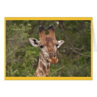Giraffe head closeup card