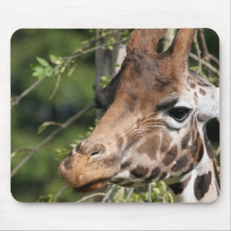 Giraffe Images Mouse Pad