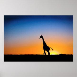 Giraffe in Central Kalahari Poster FROM 8.60