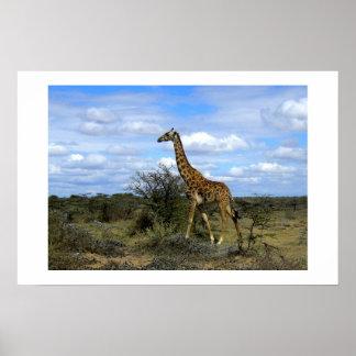 GIRAFFE IN KENYA AFRICA POSTER