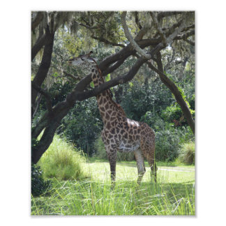Giraffe in nature photo print