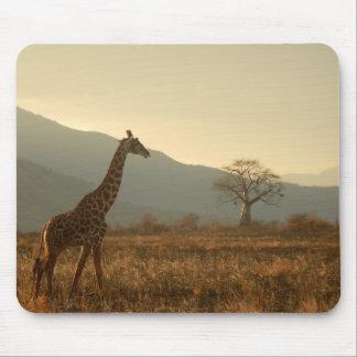 Giraffe in the Savannah Mouse Pad