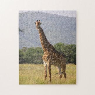 Giraffe Jigsaw Puzzle