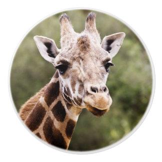 Giraffe knob