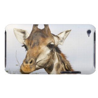 Giraffe, Kruger National Park, South Africa Barely There iPod Cover