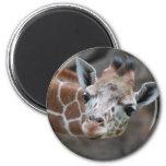 Giraffe  Magnet Fridge Magnet