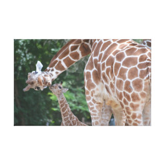 Giraffe mom and baby Poster Canvas Print