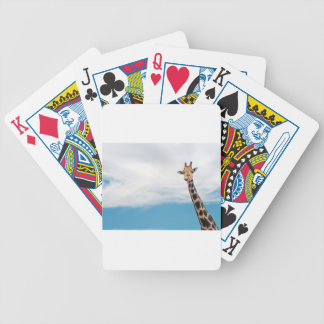 Giraffe neck and head against the clear blue sky bicycle playing cards