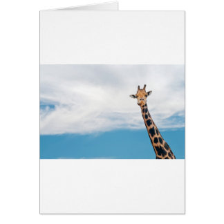 Giraffe neck and head against the clear blue sky card