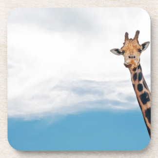 Giraffe neck and head against the clear blue sky coaster