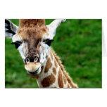 Giraffe Photo Greeting Card