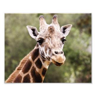 Giraffe Photo Print