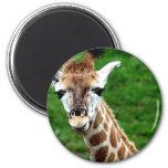 Giraffe Photo Round Magnet Magnets